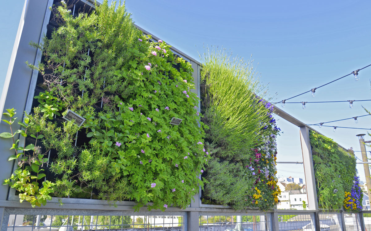 Florafelt Pro System. Living Green Design. Anchor Brewing Co., San Francisco.