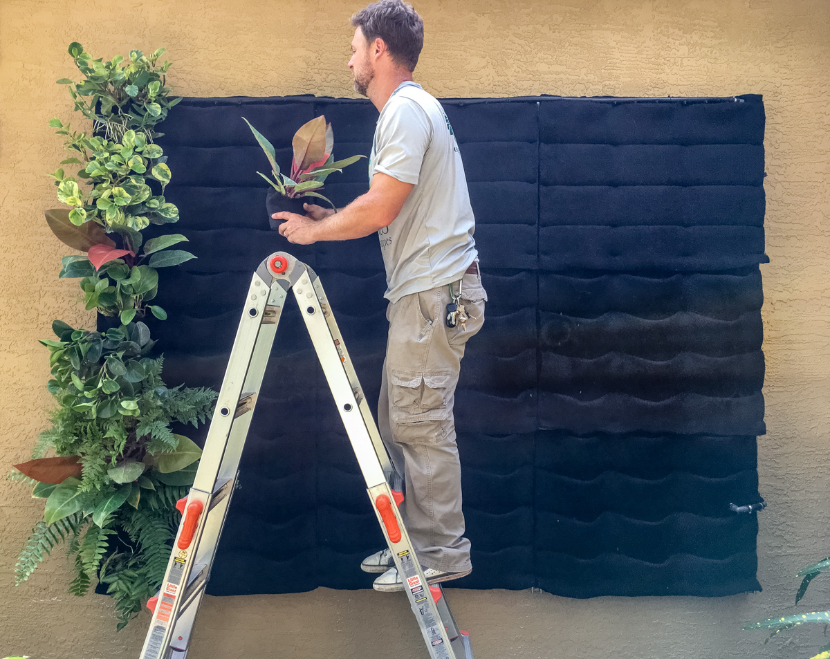 It is simple to install the Florafelt vertical garden planter panels and root wrapped plants thrive in Florafelt.