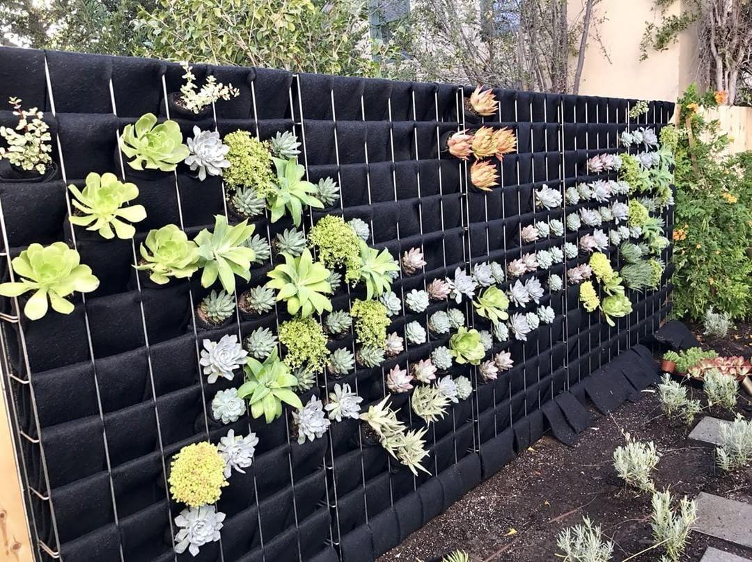 Succulents are added to complete the design using Florafelt Root Wraps by Alan Dunn Landscape Los Angeles.