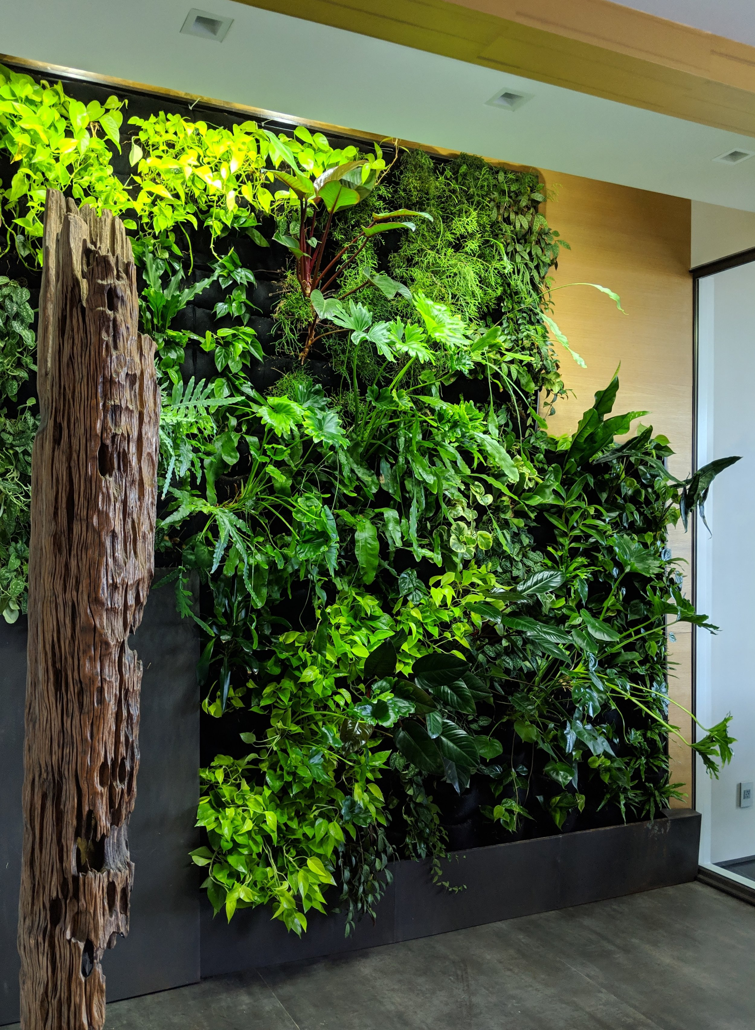 Like a window into a jungled forrest this living wall was built into the design of this architectural home.