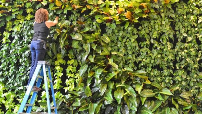 Florafelt Pocket Panel vertical garden by Duviv Gardens San Francisco.