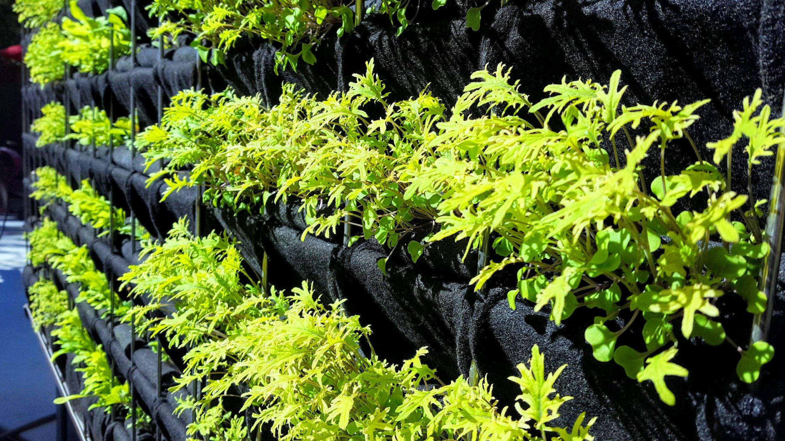 Florafelt Pro System Aquaponics Chris Bribach Sonoma California 15.jpg