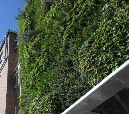 Florafelt living wall in Stabroek Belgium by Joris Bunschoten. (5 years later)