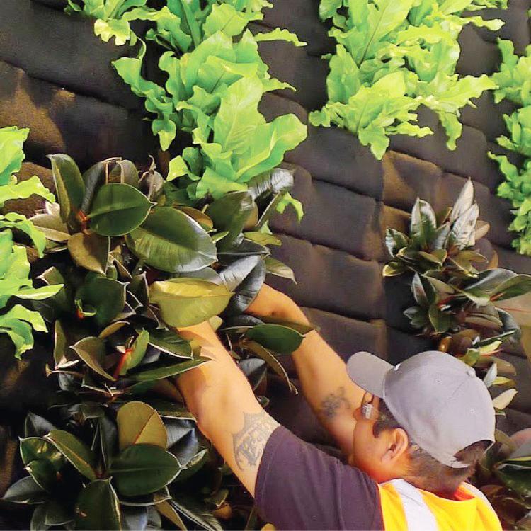 Florafelt Living Wall System Planting.jpg
