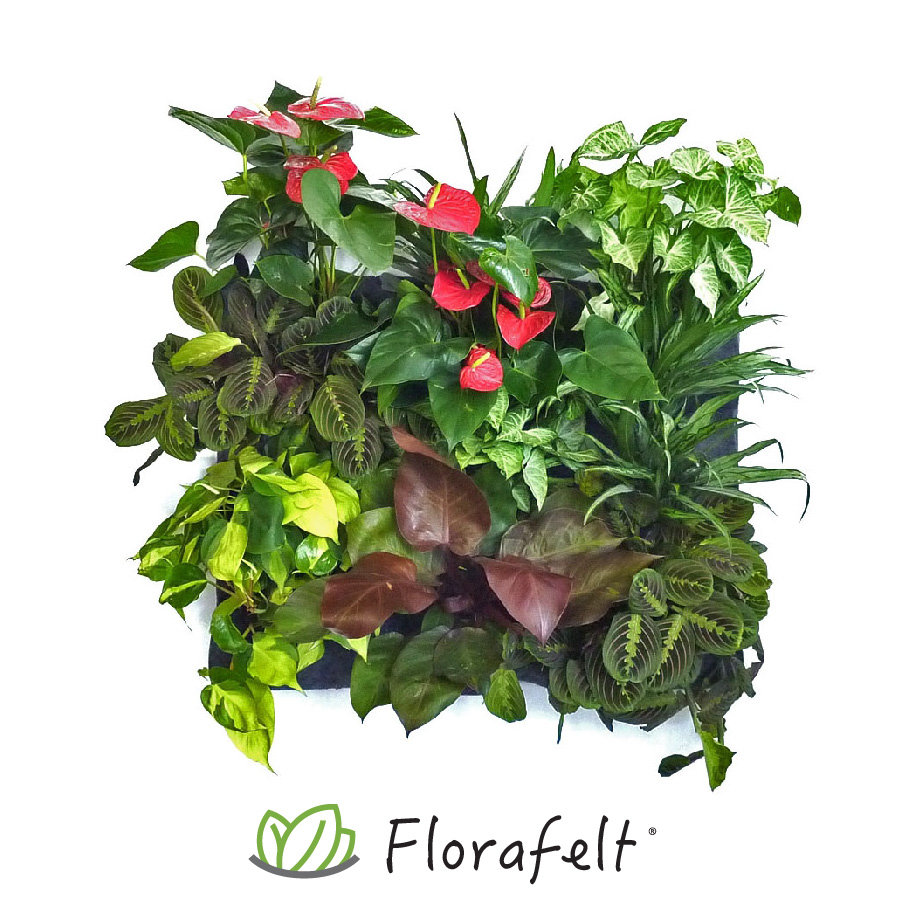 Florafelt 12-Pocket Panel Living Wall System Planted