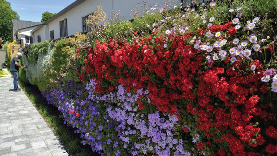 Florafelt Living Wall by Planted Design in Pleasanton, California.