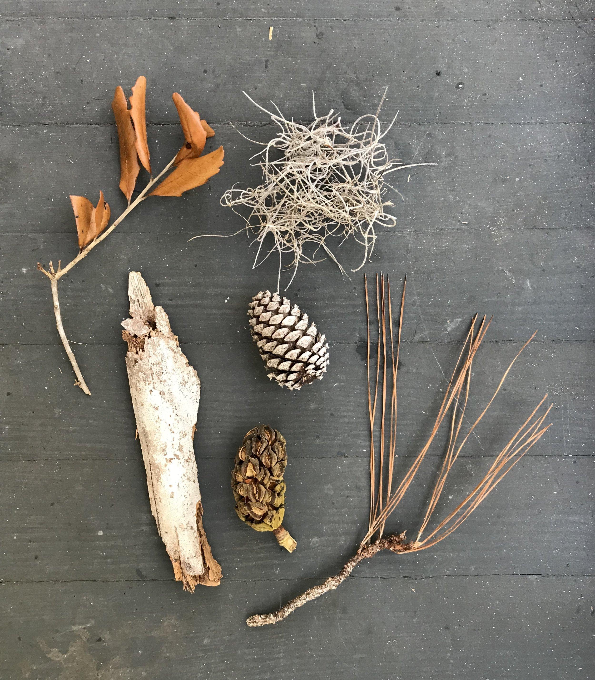 palm bark, pine cones, pine needles, spanish moss