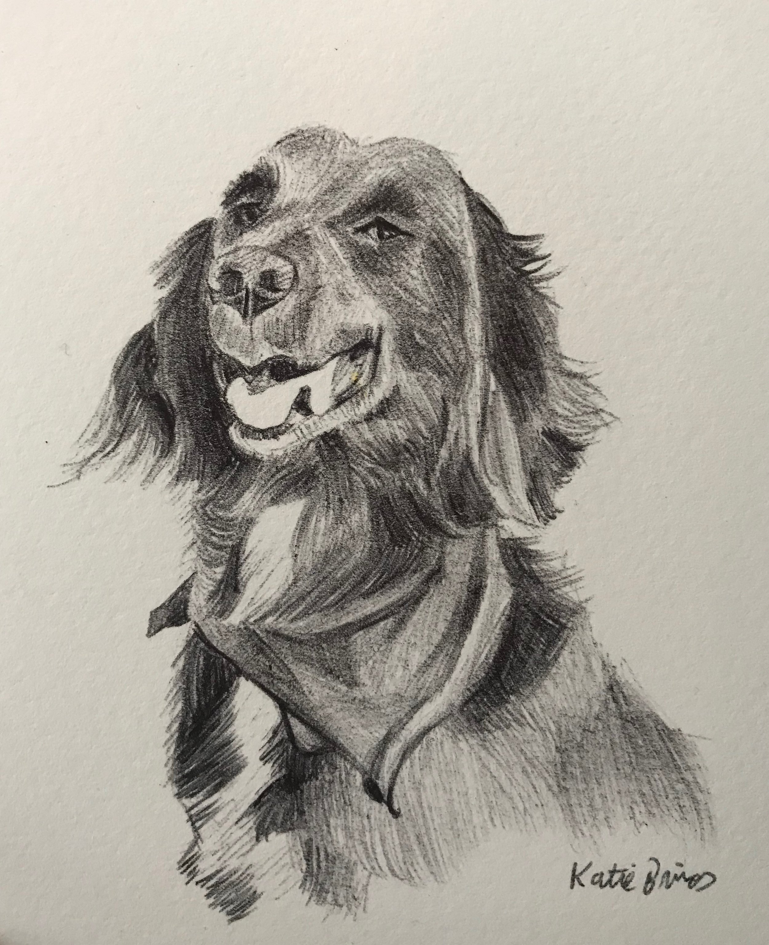 Jasper, pen & ink on paper, 10 cm x 14 cm
