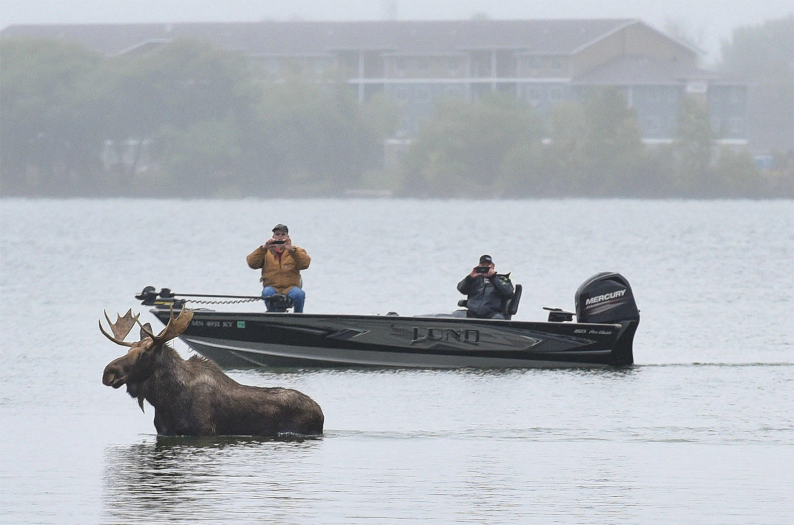 A moose visited Lake Bemidji in September 2017.