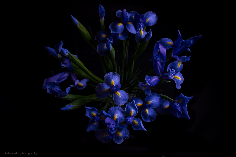 Iris20160218.jpg