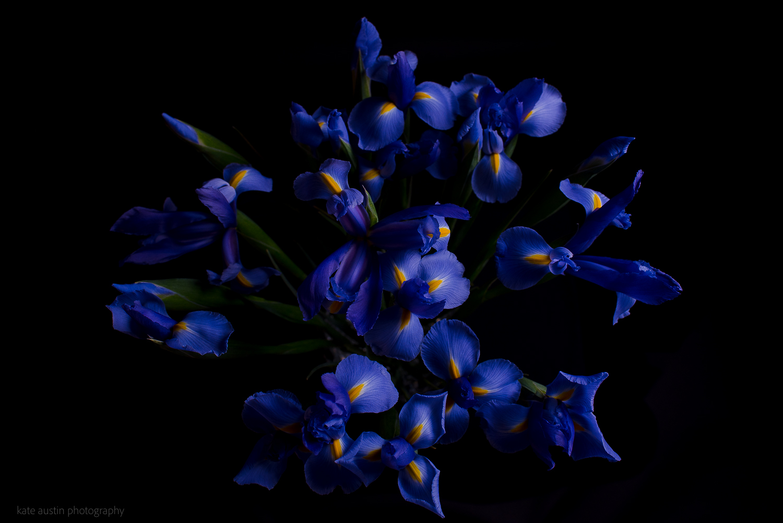 Iris20160218-2.jpg