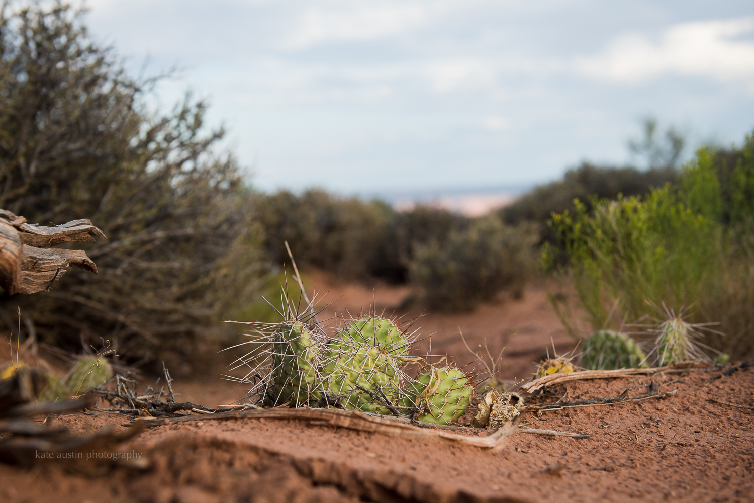 day37_murphytrail-canyonlands_moab201620160802-14.jpg