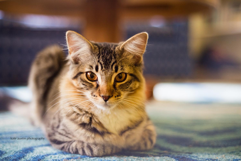 cats20160914-2.jpg