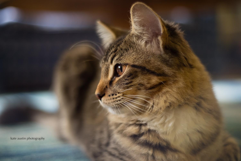 cats20160914-3.jpg