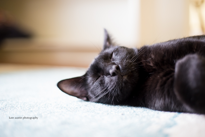 cats20160914-7.jpg
