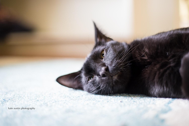 cats20160914-8.jpg