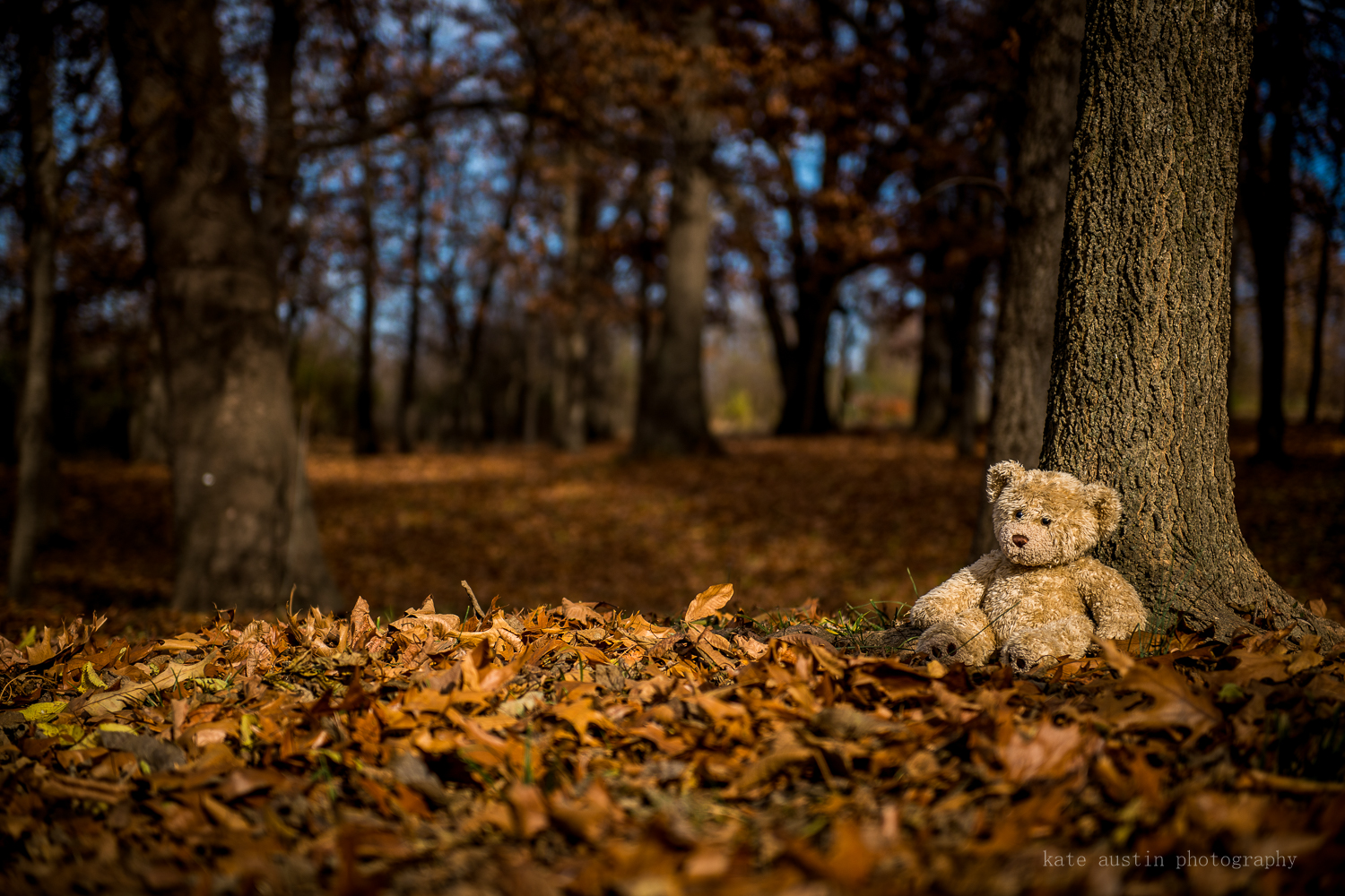teddy_in_woods20161201--3.jpg