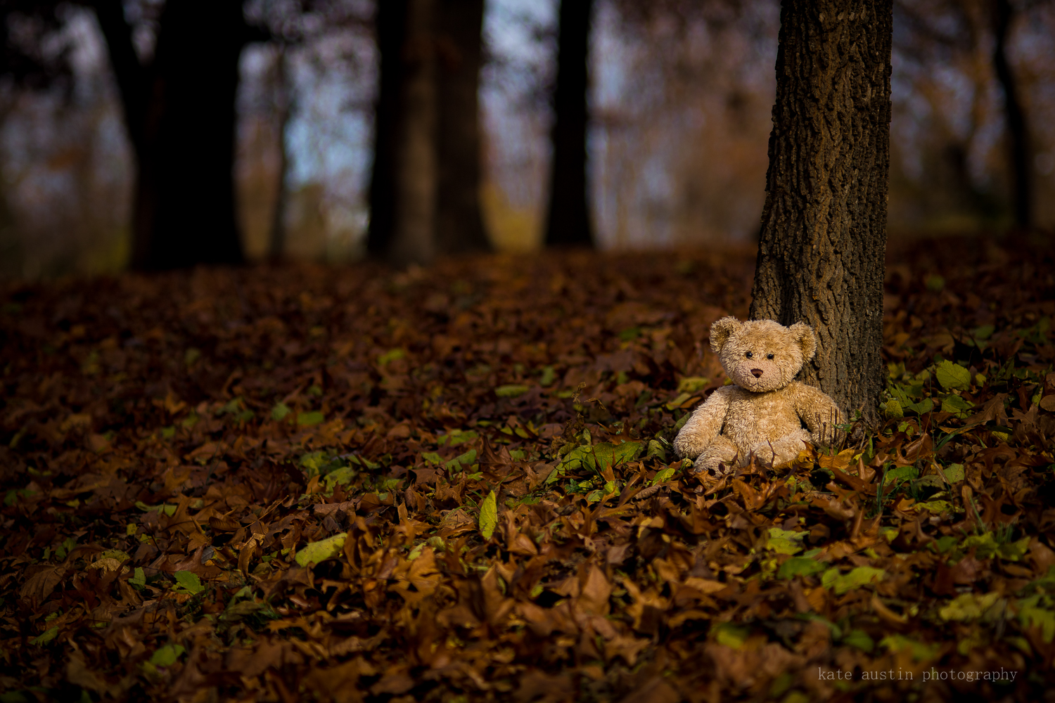 teddy_in_woods20161201--5.jpg