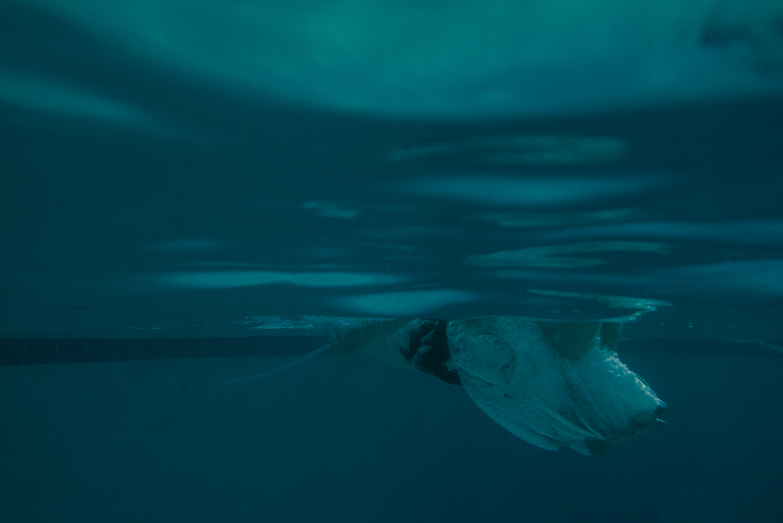 underwater_hotsprings-15.jpg