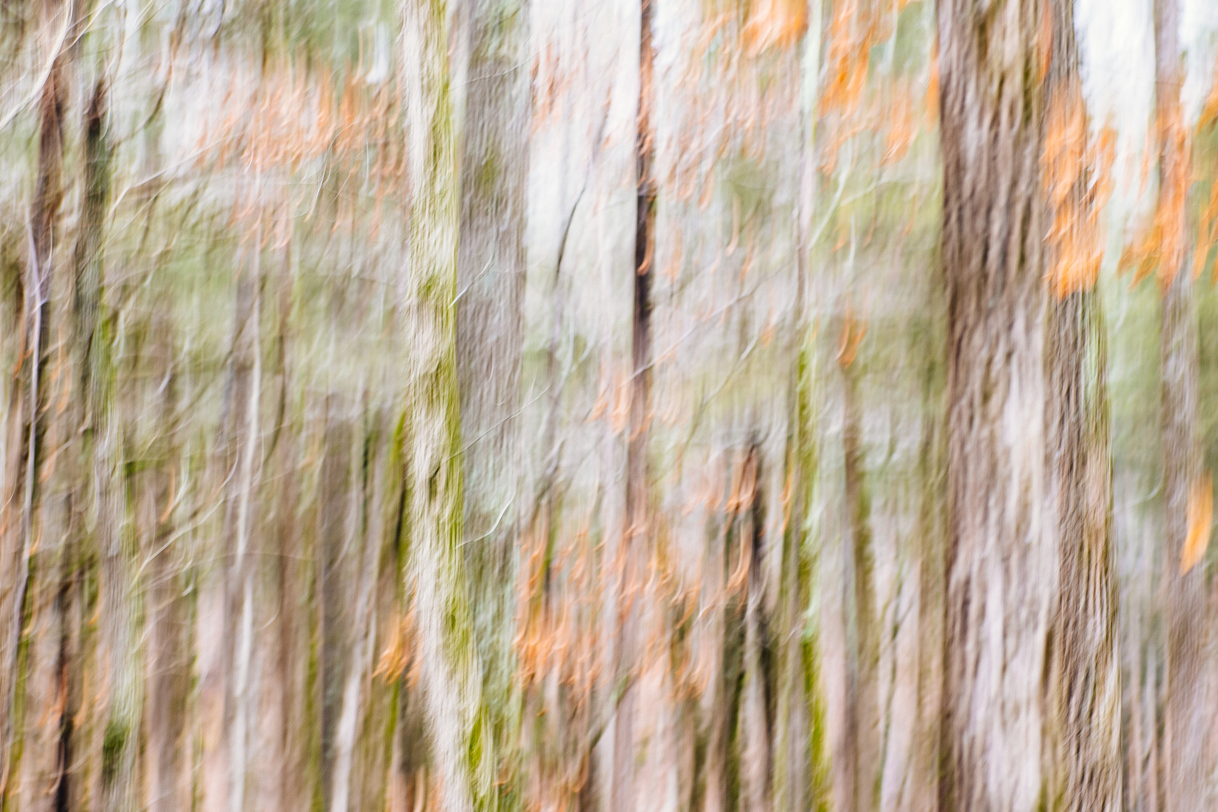 """ICM"" or Intentional Camera Movement, taken at Devil's Den State Park"