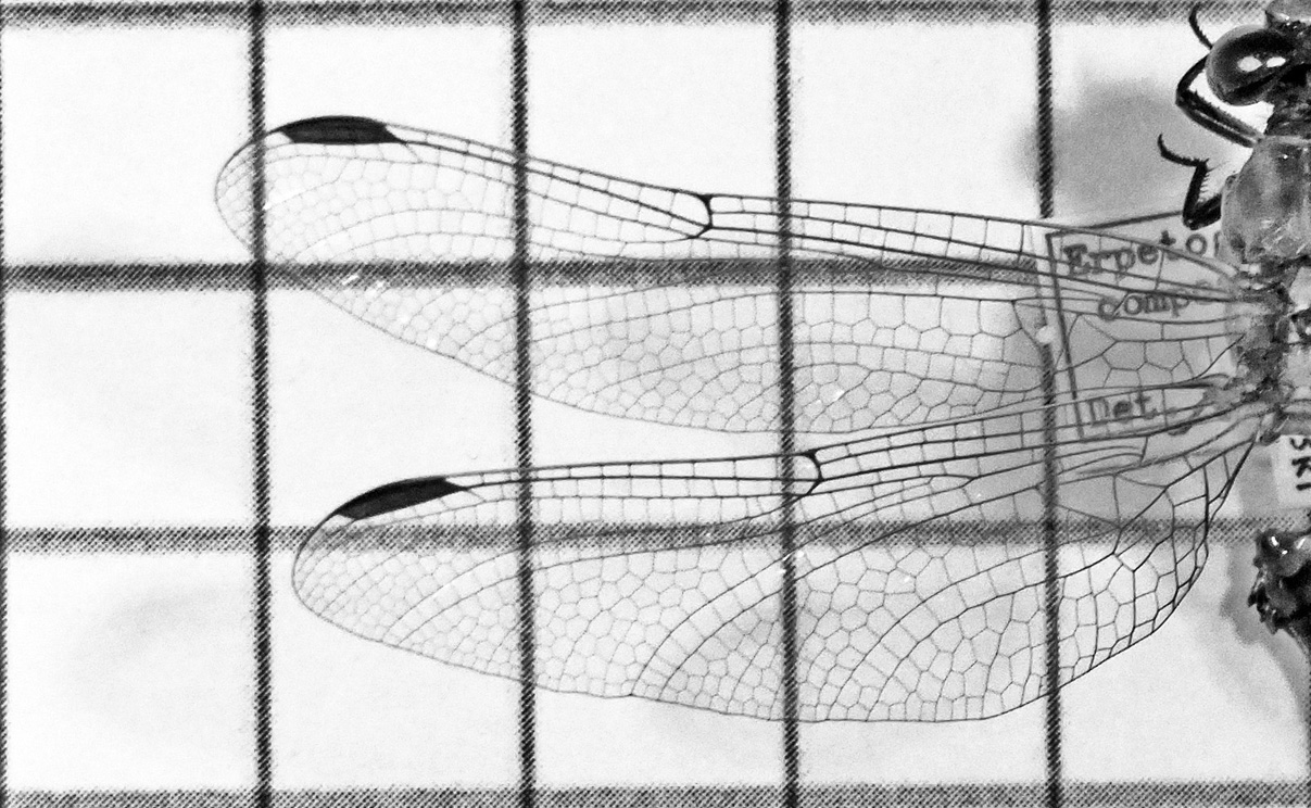 Improving Structural Resilience: A Study of Insect Wing Venation Using Additive Manufacturing - Sponsor : The Biomimicry Center at ASU (Seed Grant)Period of Performance: 06/2018 – 05/2019Partners: Associate Professor Dhruv Bhate (The Polytechnic School, Ira A. Fulton Schools of Engineering) and Professor Lara Ferry, PhD (Functional Morphology & Director, School of Mathematical & Natural Sciences; Senior Sustainability Scholar, Julie Ann Wrigley Global Institute of Sustainability; Affiliated Faculty, Global Security Initiative)