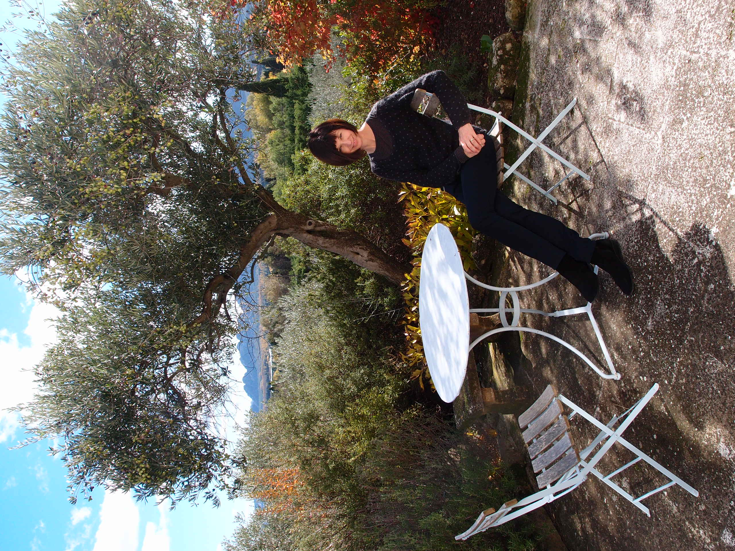 Under the olive tree in Saint Remy de Provence