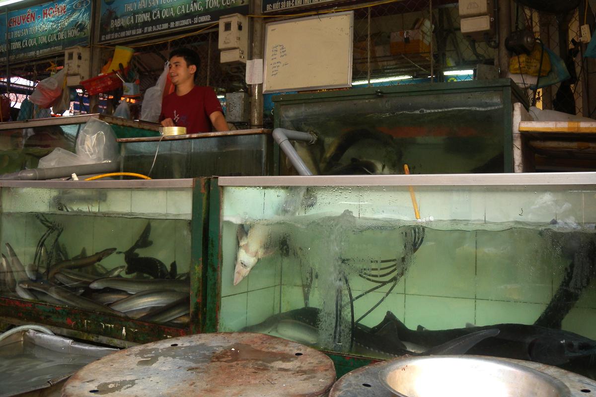 Hanoi, venditore di squali