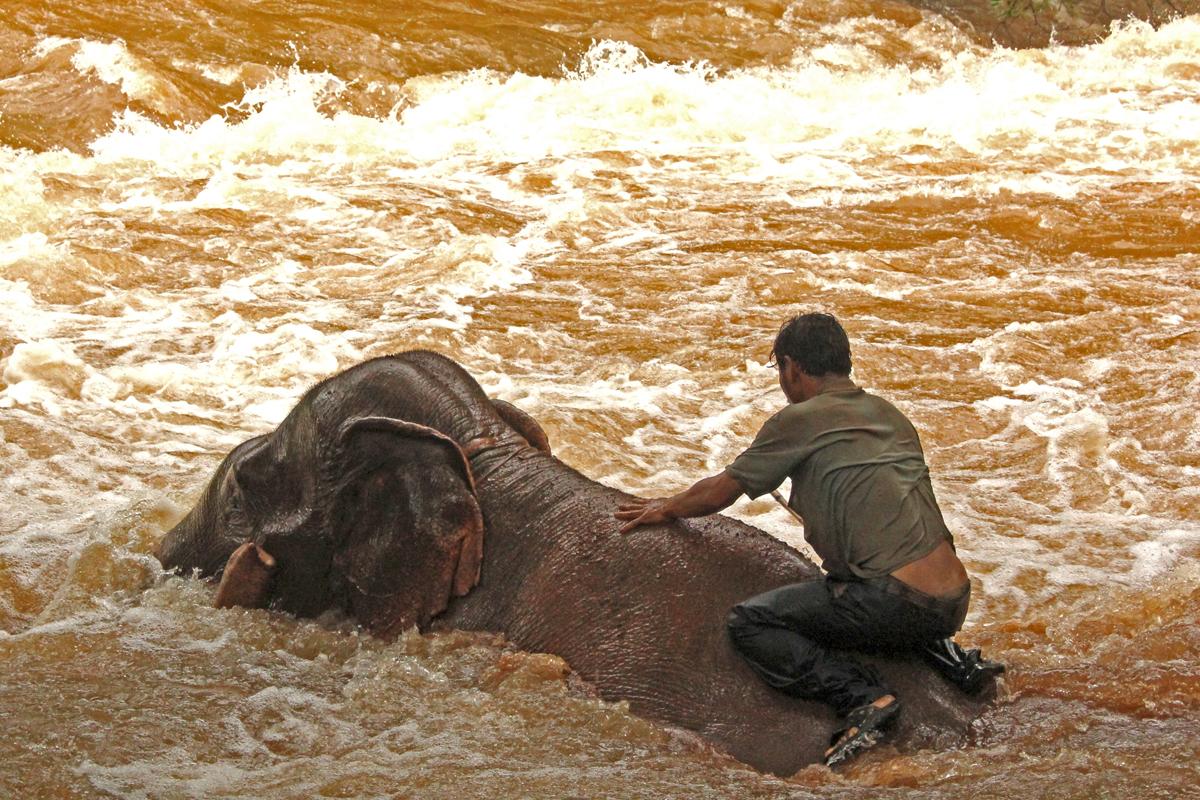 Lavaggio degli elefanti