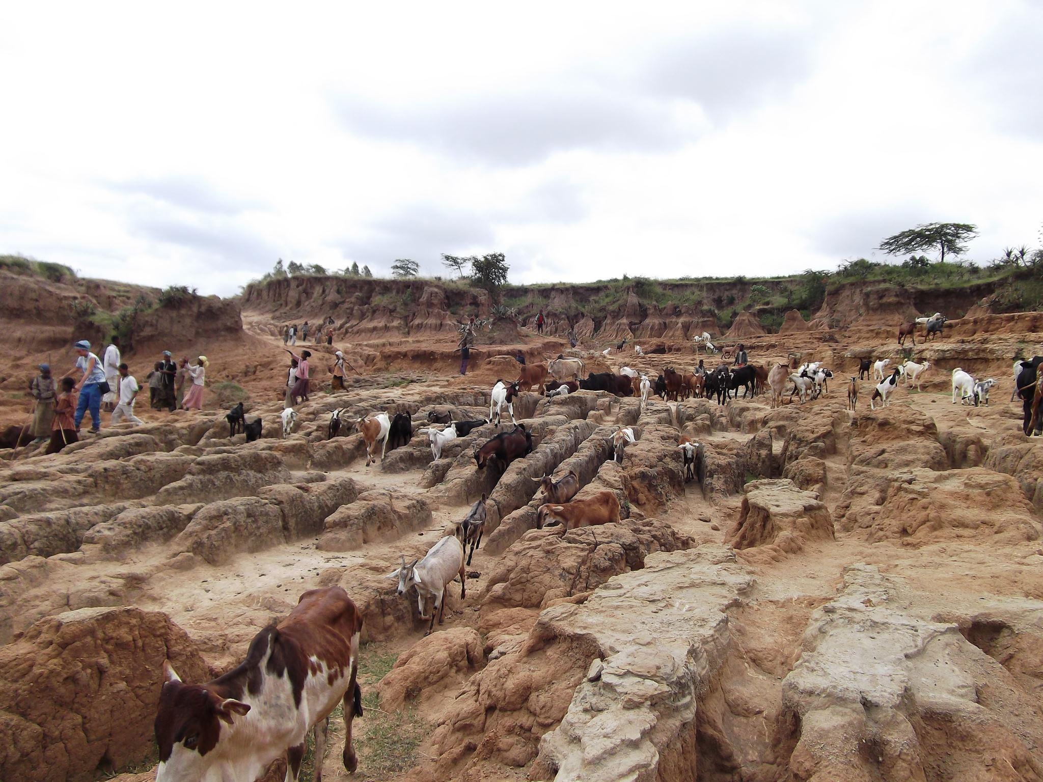 L'erosione del suolo a Ropi. Foto di Greta Solari