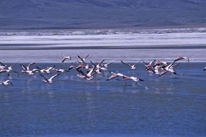 Bolivia, foto di Mario Verin