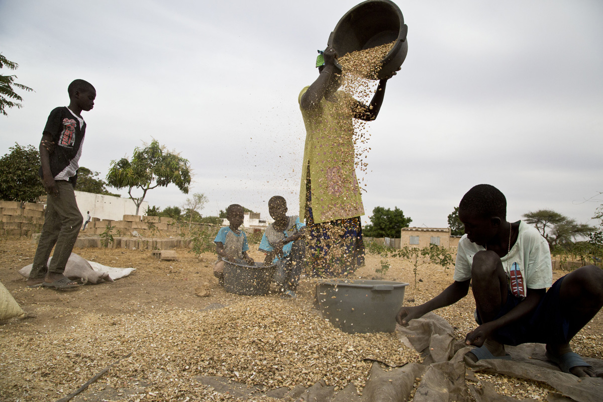 Sinè Mbarick, il setaccio degli arachidi
