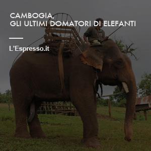 cambogiabottom.jpg