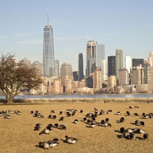 newyork top.jpg