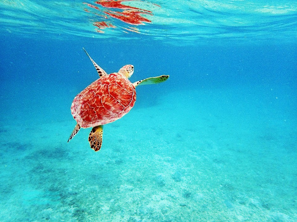 Seeing this sea turtle and swimming within arm's reach of him was one of the highlights of this trip!