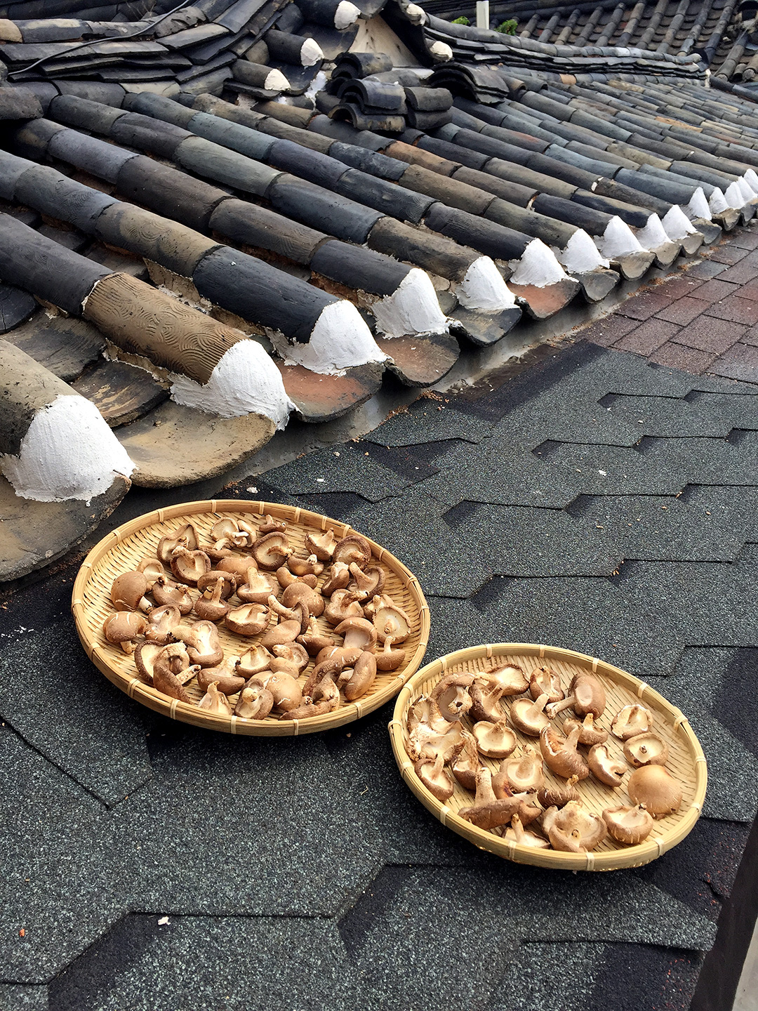 Mushrooms laying out to dry on top of the clay tile roofs.