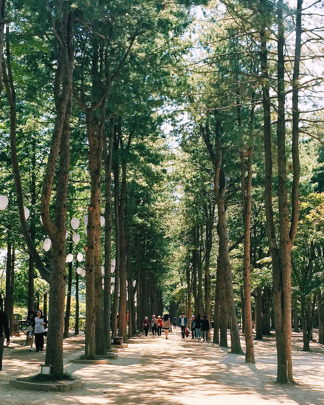 Nami Island is known for their beautiful tree-lined trails. Come here during the fall when the leaves are changing color.