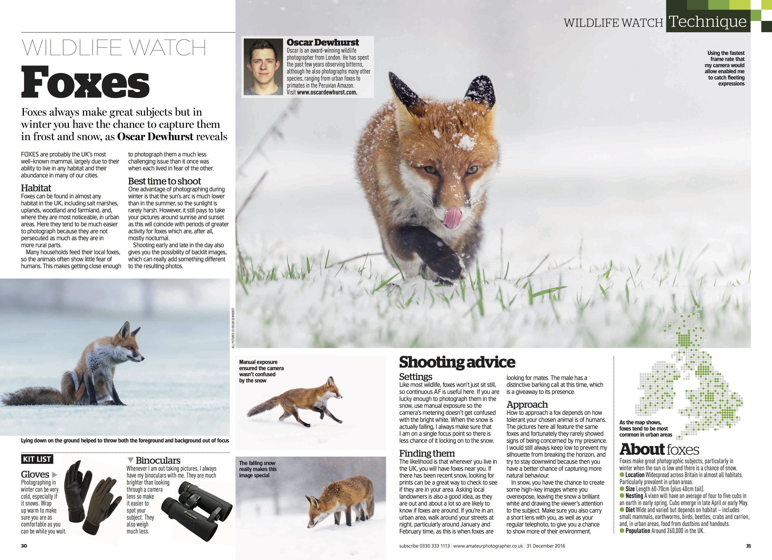 foxes dec 31.jpg