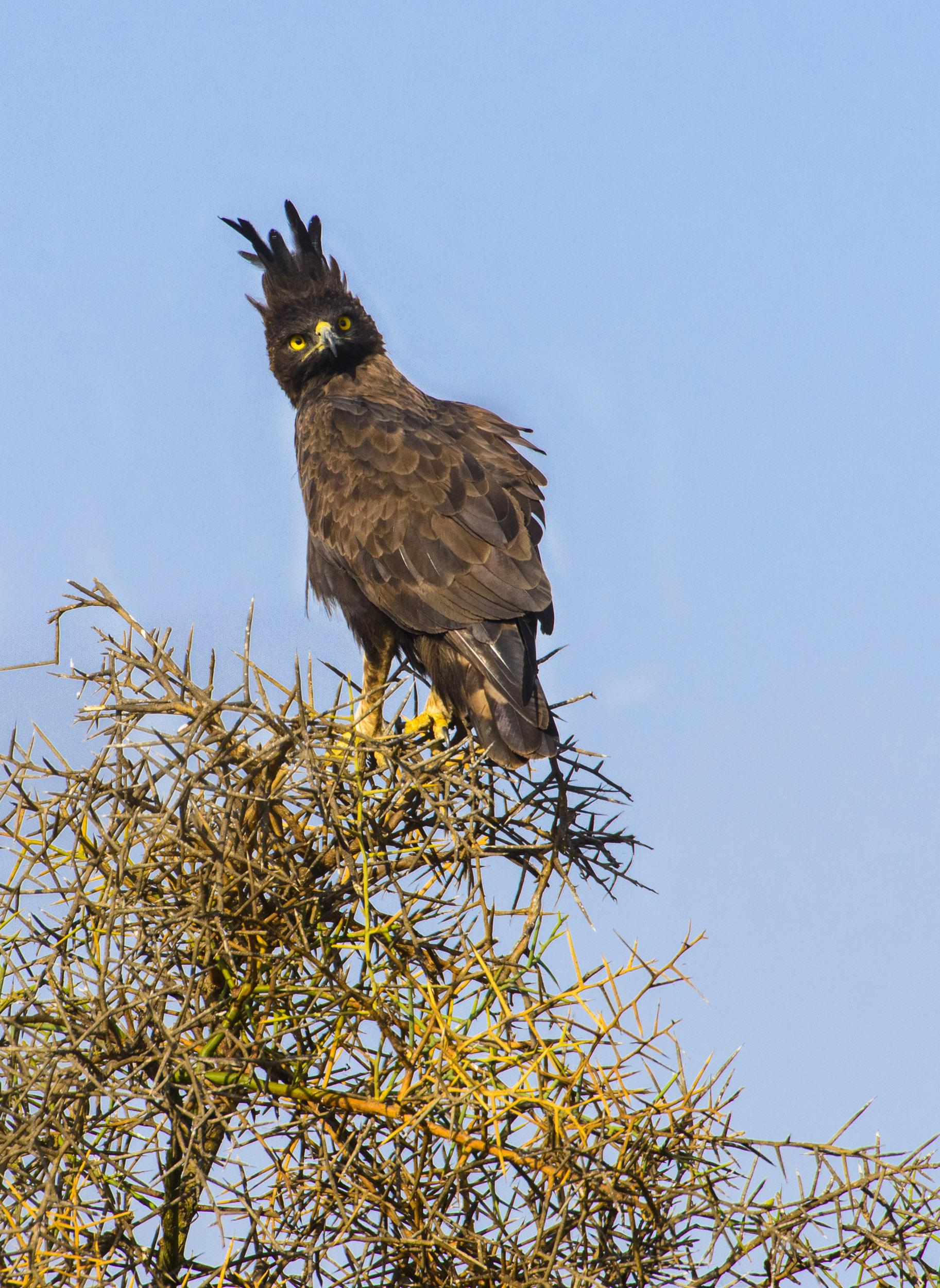 OscarDewhurst_Kenya_2014-2.jpg
