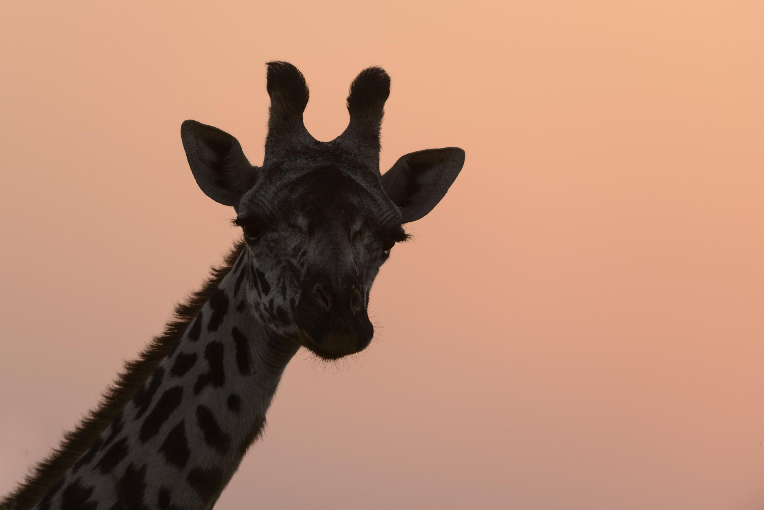 OscarDewhurst_Kenya_2014-123.jpg