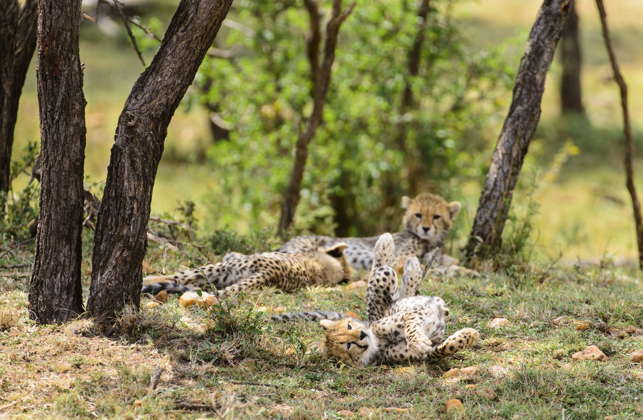 OscarDewhurst_Kenya_2014-161.jpg