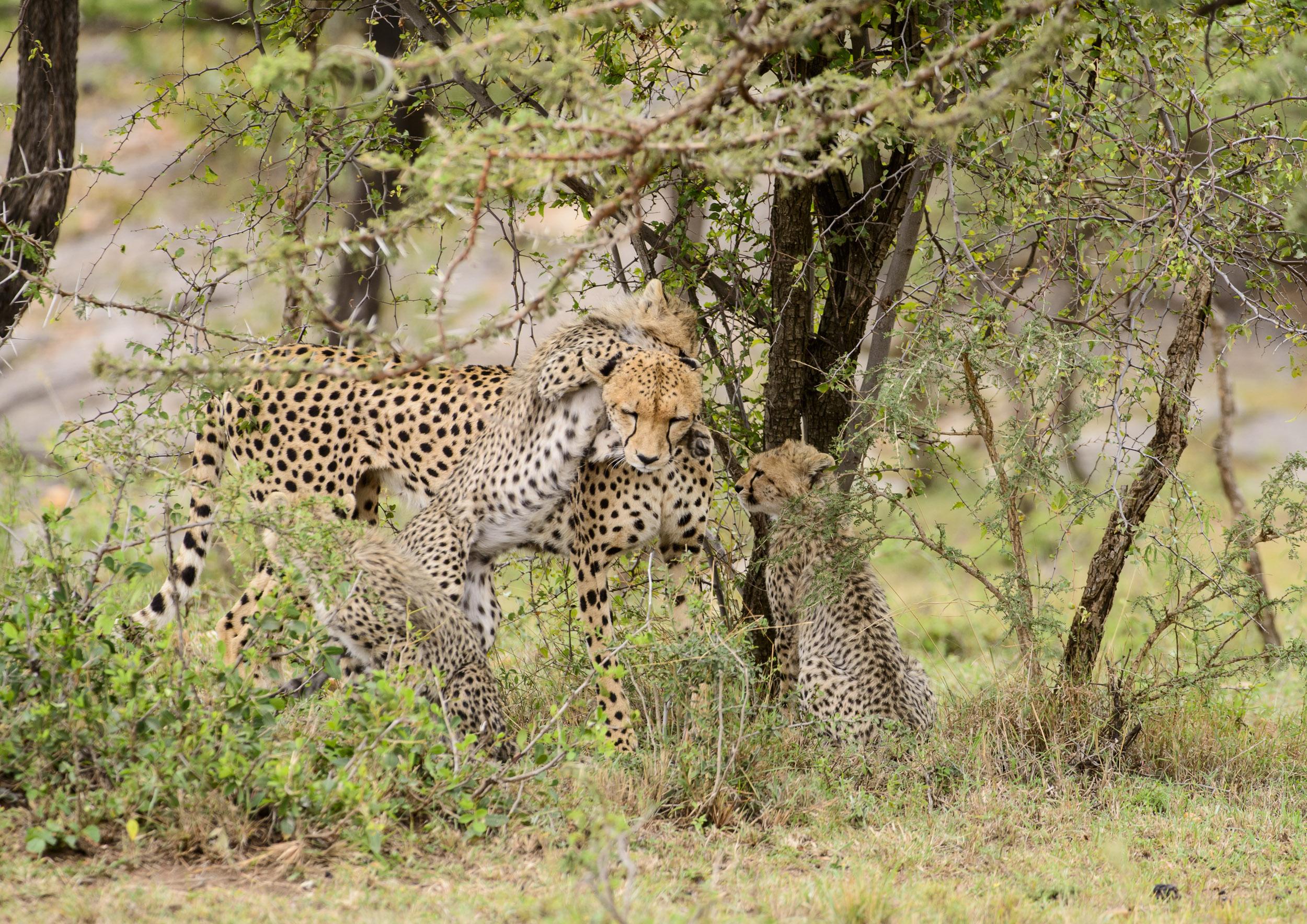 OscarDewhurst_Kenya_2014-171.jpg