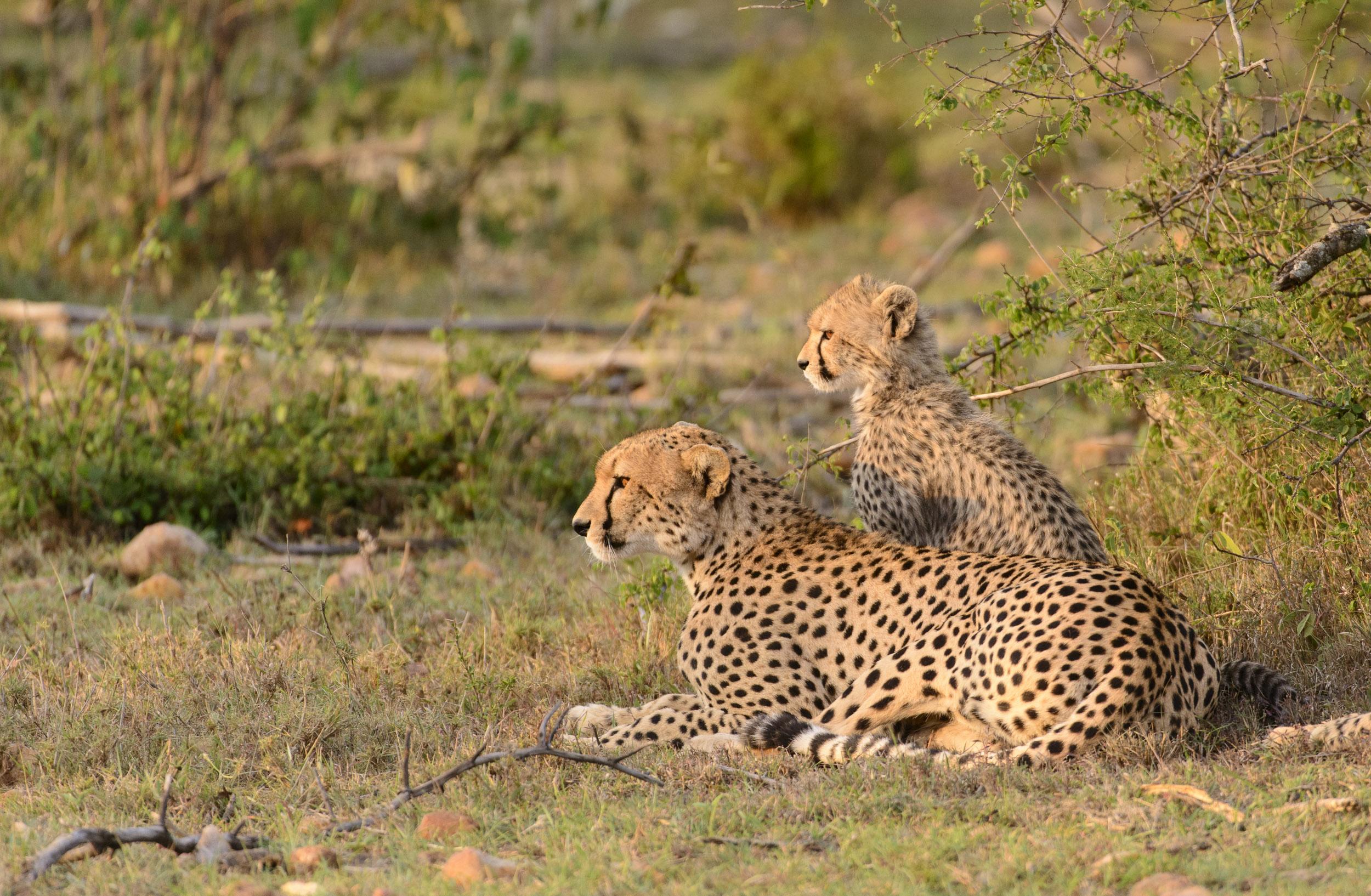 OscarDewhurst_Kenya_2014-224.jpg