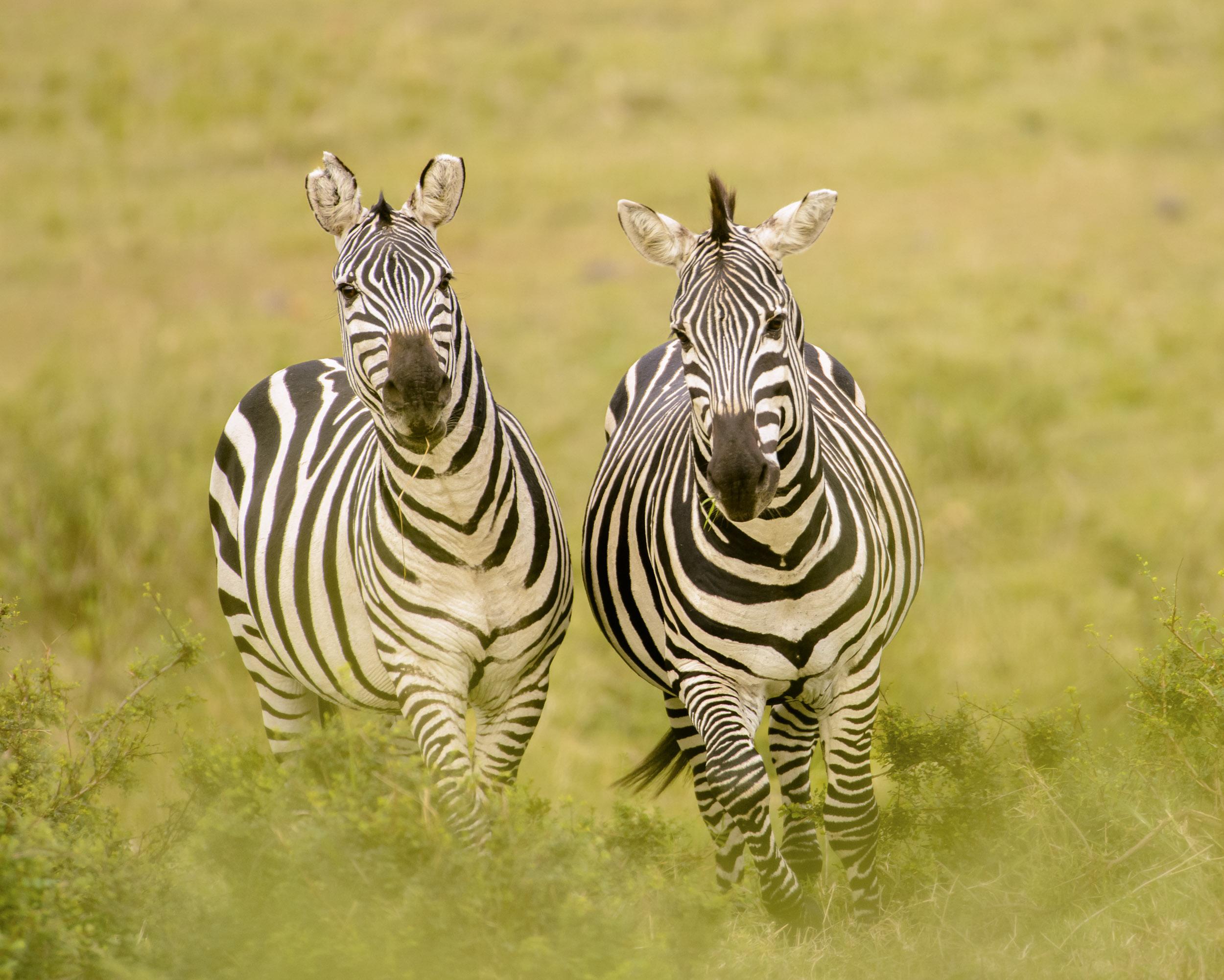 OscarDewhurst_Kenya_2014-279.jpg