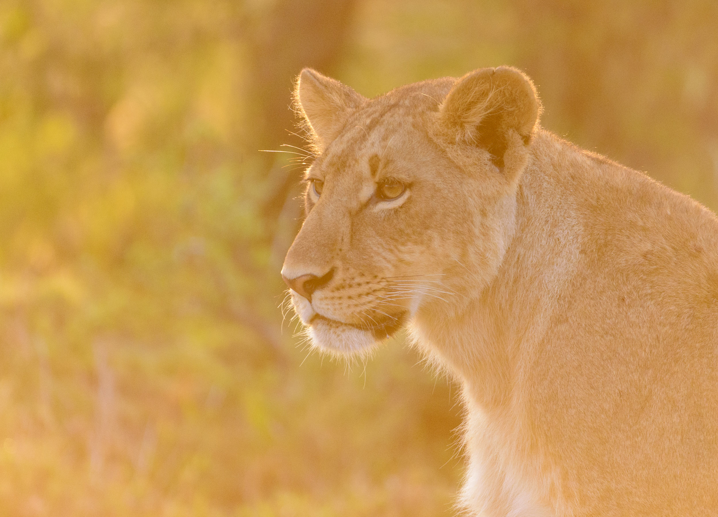 OscarDewhurst_Kenya_2014-395.jpg