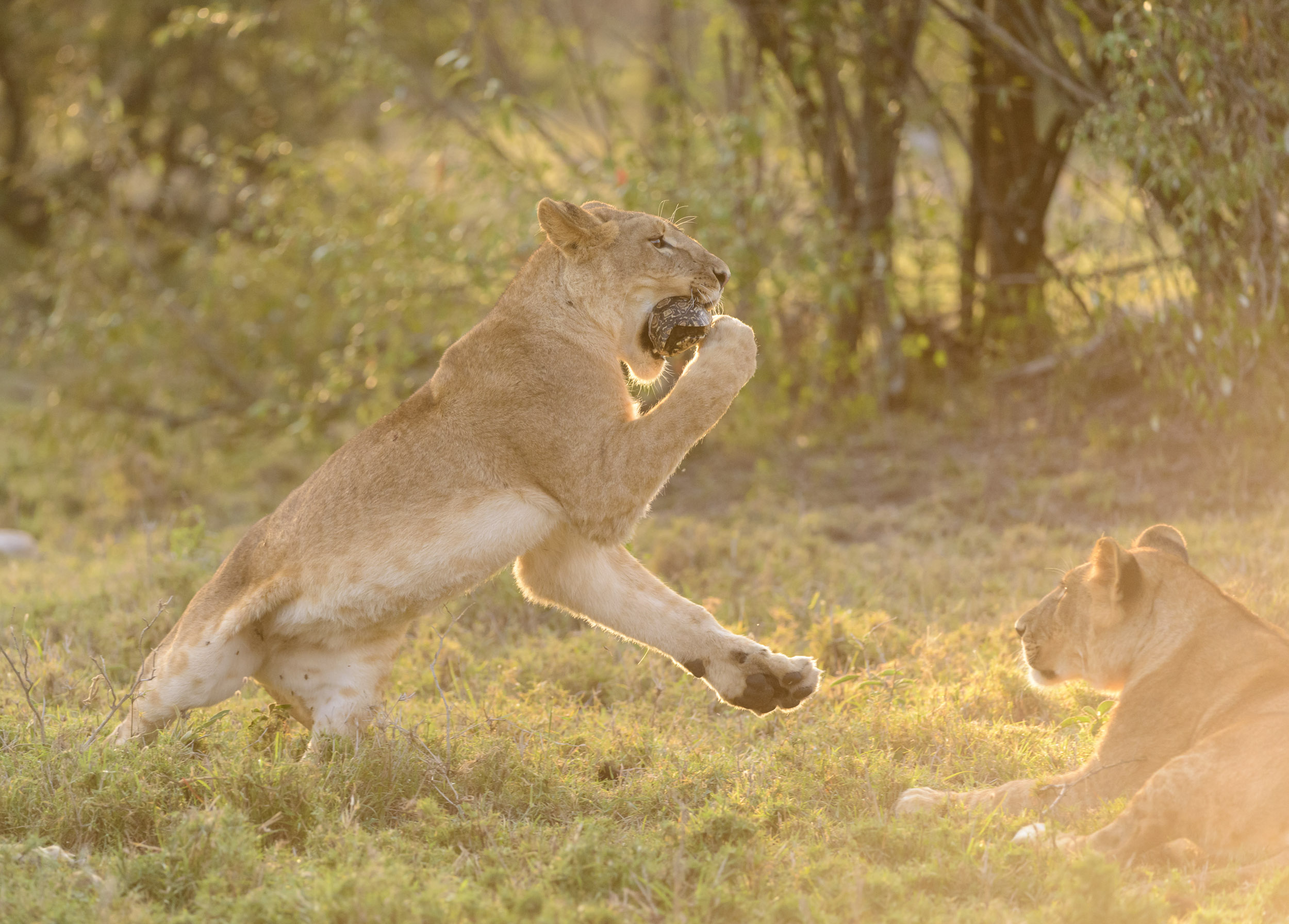 OscarDewhurst_Kenya_2014-400.jpg