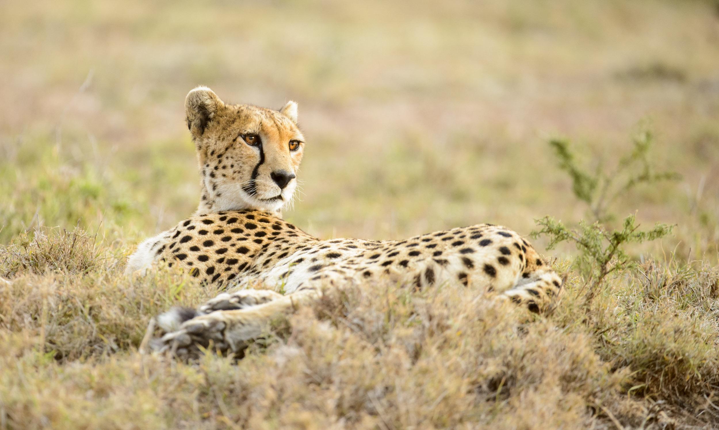 OscarDewhurst_Kenya_2014-532.jpg