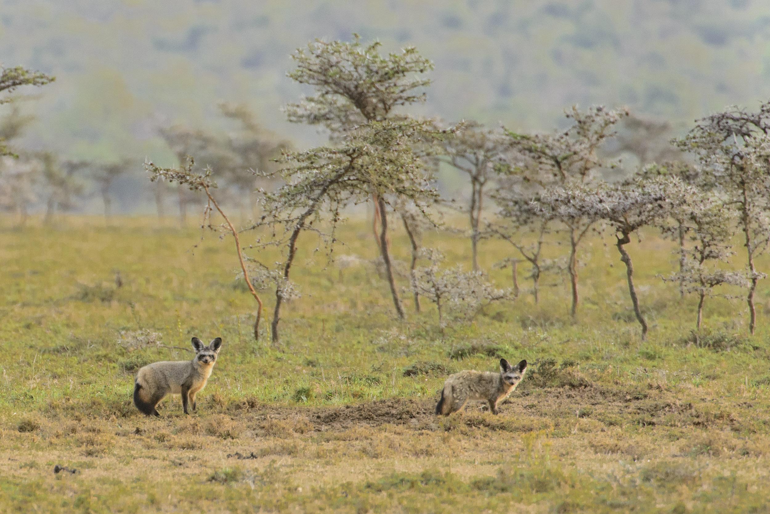 OscarDewhurst_Kenya_2014-659.jpg