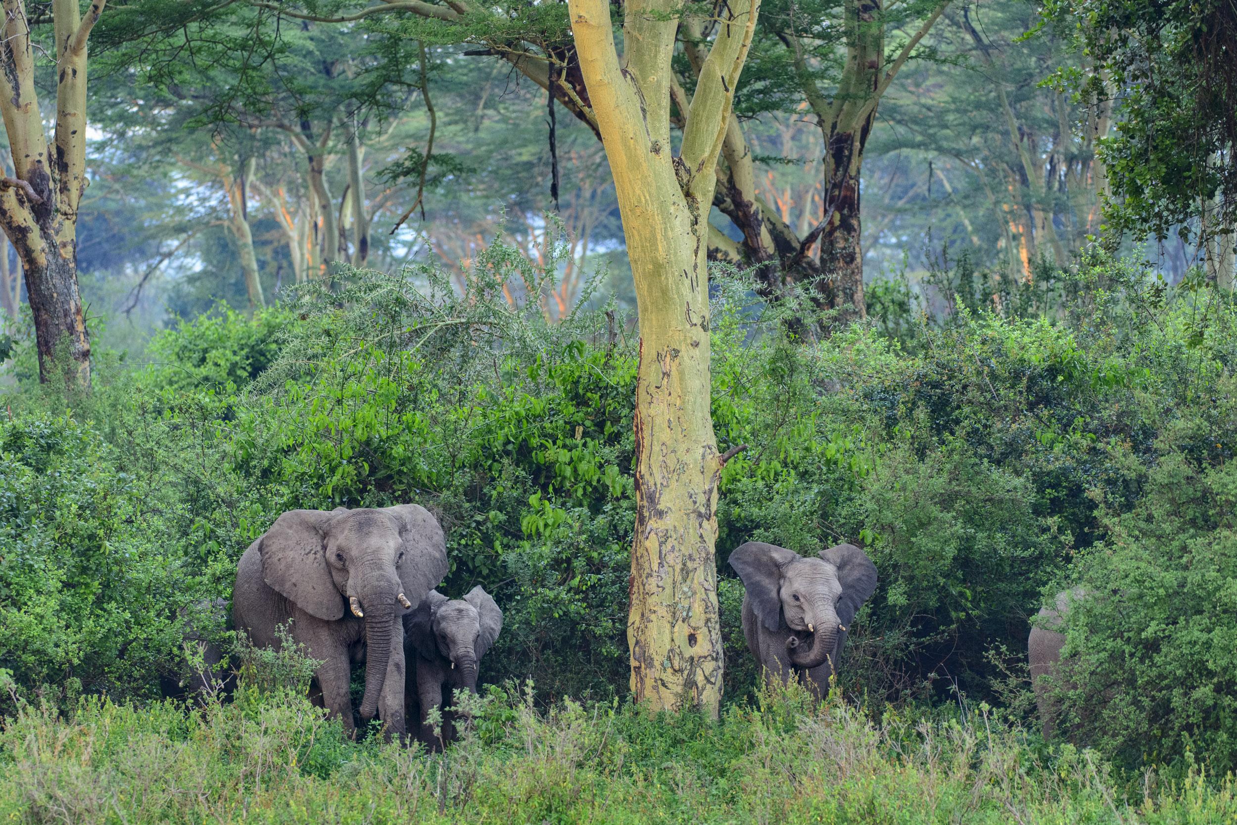 OscarDewhurst_Kenya_2014-575.jpg