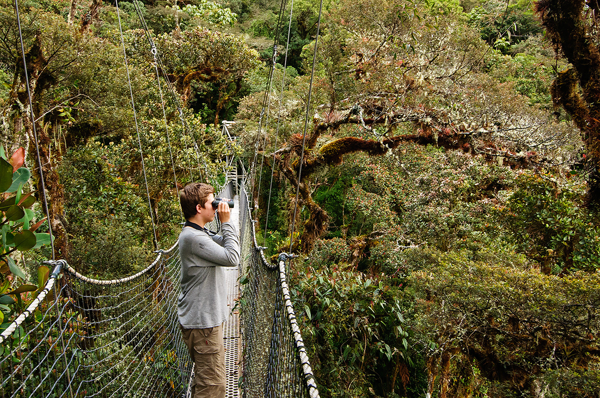 Looking for grey-breasted mountain-toucans (unsuccessfully) in the cloud forests surrounding Wayqecha Biological Research Station in 2014