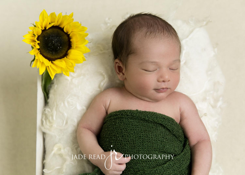maternity pregnancy gold coast baby photographer jade read photography maternity baby boy sunflower green yellow